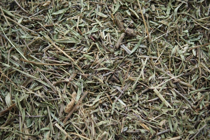 Tomillo de la infusión de hierbas Hierbas medicinales fondo de la textura de la hierba seca imagen de archivo