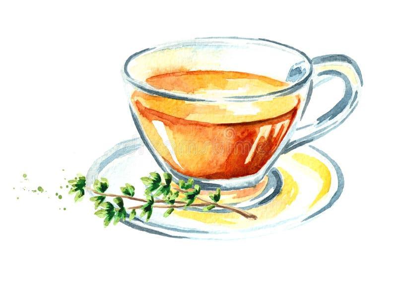 Tomillo medicinal de la hierba Taza de té sano Infusión hecha de las hojas del tomillo Ejemplo dibujado mano de la acuarela aisla libre illustration