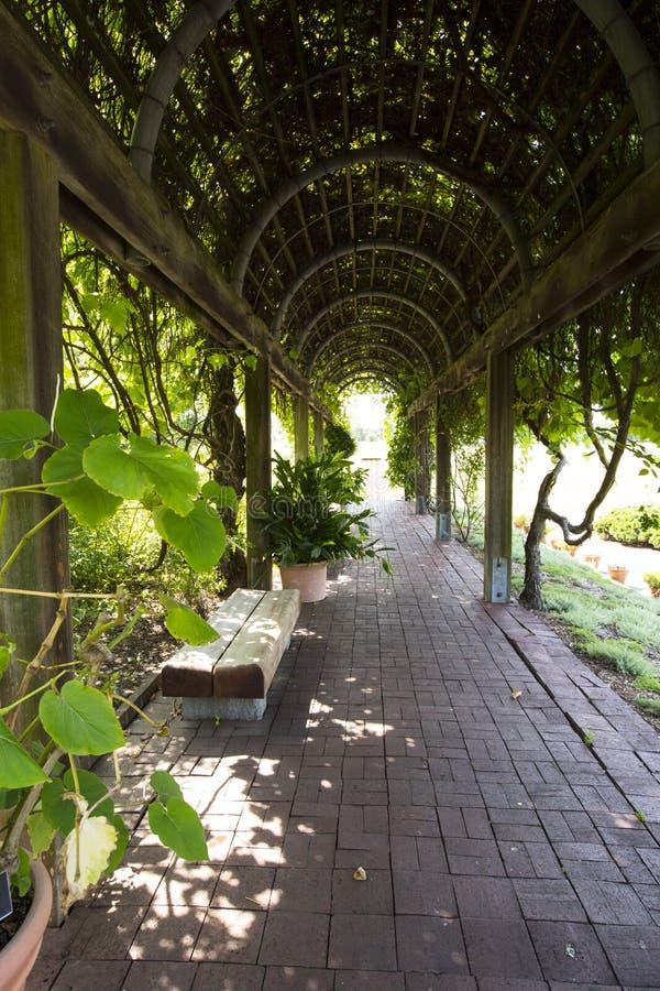 Tomma bänkar i trädgårds- tunnel och formad pergola arkivfoto