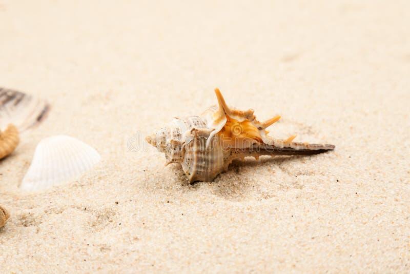 Tomma snäckskal i sanden på en strand arkivfoto