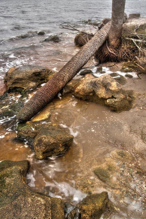 Tomoka国家公园在冬天期间在佛罗里达,美国 库存照片