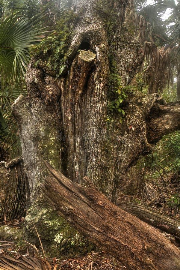 Tomoka国家公园在冬天期间在佛罗里达,美国 免版税图库摄影