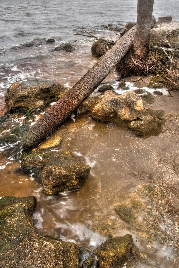 Tomoka State Park tijdens de Winter in Florida, de V.S. stock foto's