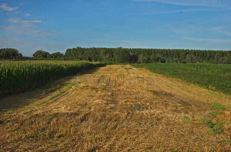 Tomt jordbruks- fält som redan ar skördade och växa för skördar på båda sidor royaltyfri bild