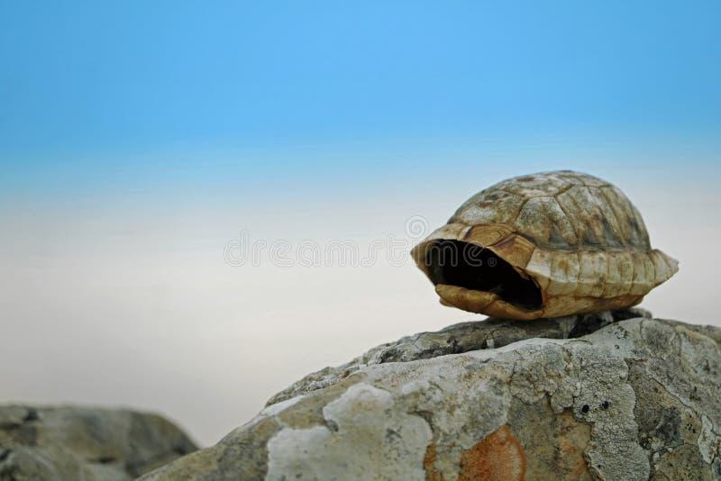 Tomt litet sköldpaddaskal av Testudohermannien på stenen med blå molnig himmel i bakgrund royaltyfri foto