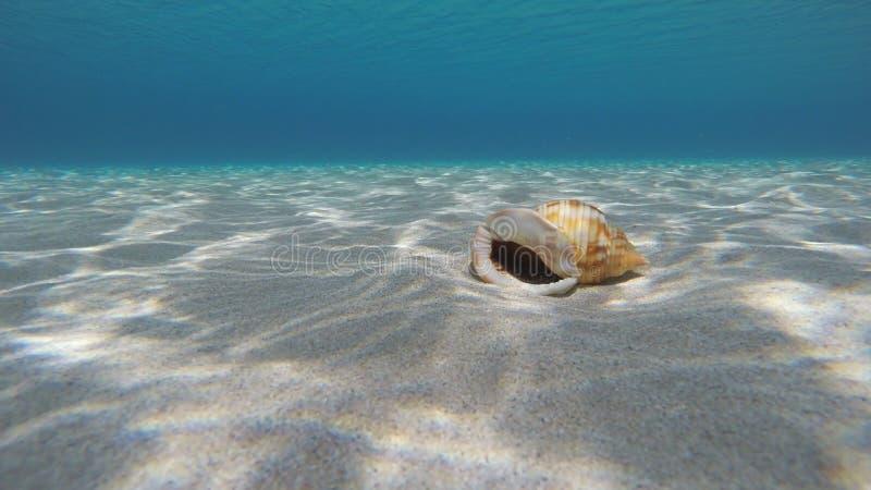 Tomt snäckskal på Sandy Seabed royaltyfria bilder