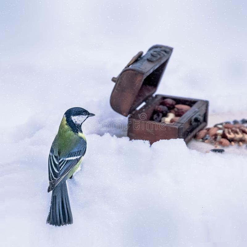 Tomtit, синица, titmouse, воробьинообразная птица в зиме стоковое фото