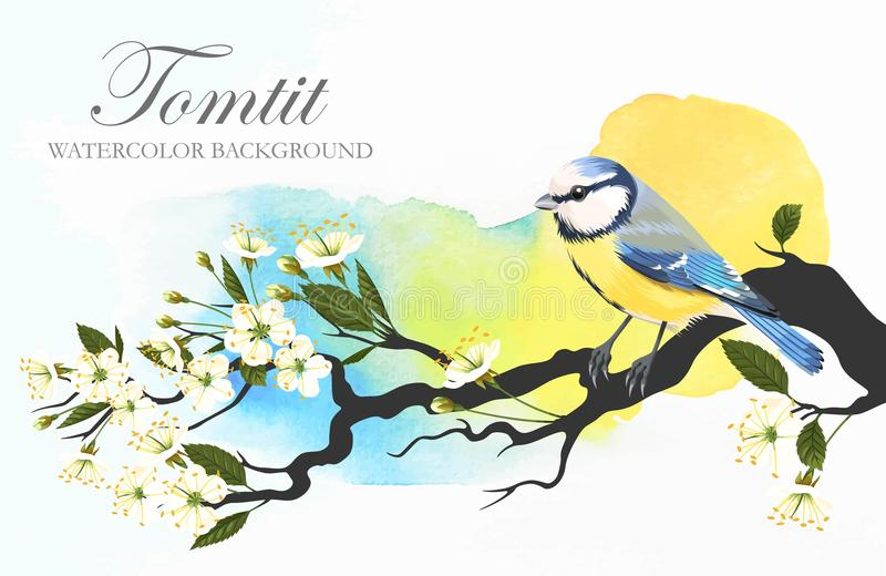 Tomtit on the cherry branch stock illustration