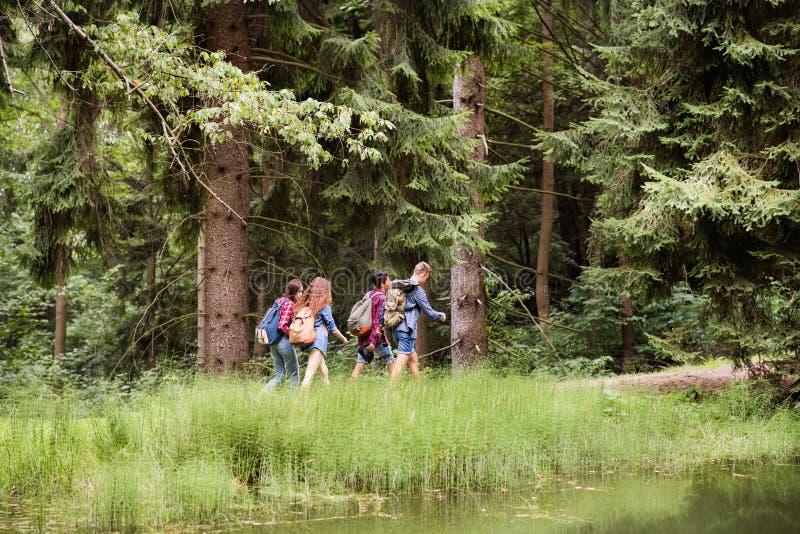 Tonåringar med ryggsäckar som fotvandrar i skogsommarsemester royaltyfria foton