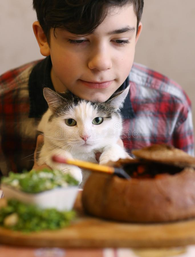 Tonåringpojke med den roliga gulliga katten som äter matställen - borsch för ryssbeatrootsoppa med sourcream- och dillslut upp fo arkivfoto