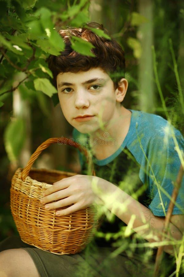 Tonåringpojke som skördar den svarta vinbäret med korgen royaltyfria foton