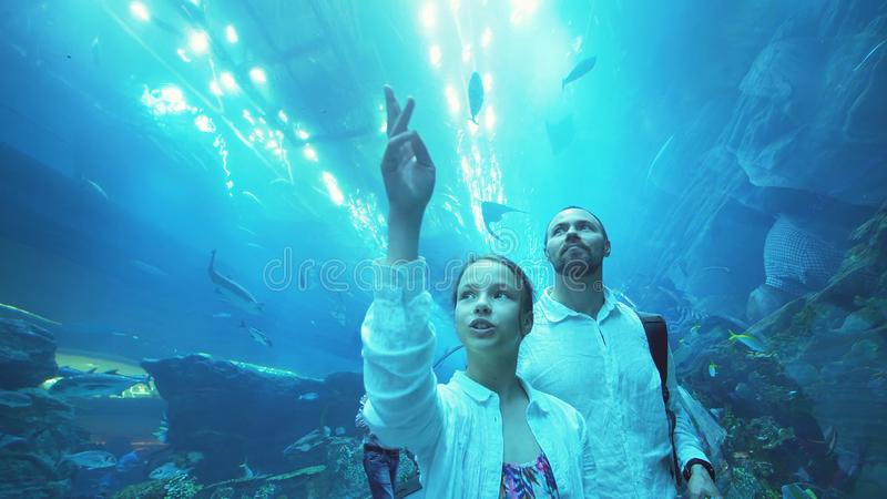 Tonårs- flicka med farsan som håller ögonen på amusingly fisken i akvarium royaltyfria bilder