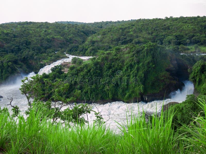 Tonad bild av den majestätiska vattenfallet i parkera Murchison Falls i Uganda mot bakgrunden av djungeln fotografering för bildbyråer