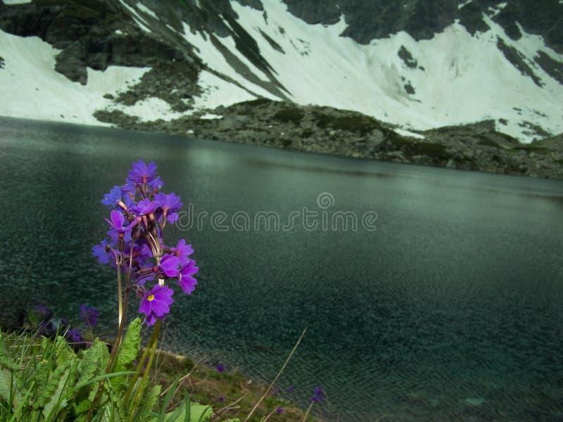 Tonad bild av ett blommafält royaltyfri fotografi