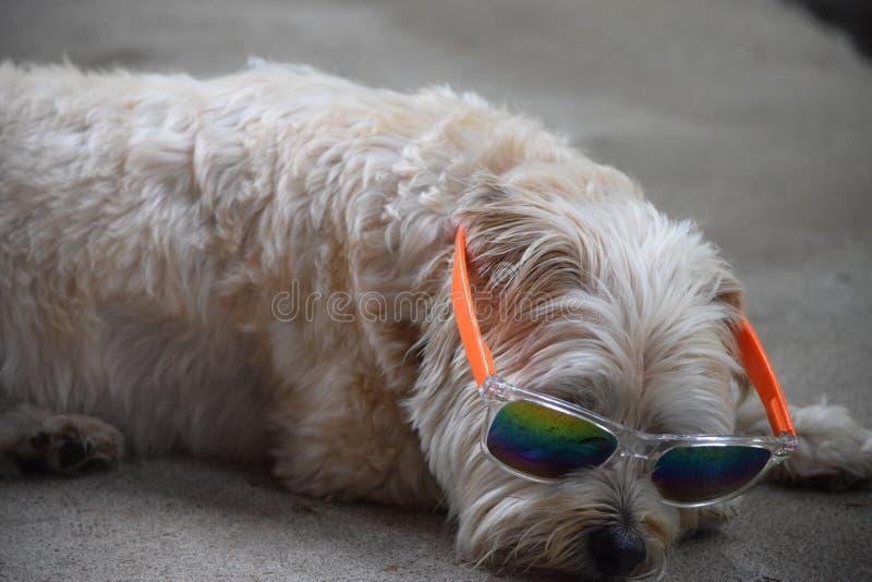 Tonalità d'uso del cucciolo immagine stock libera da diritti