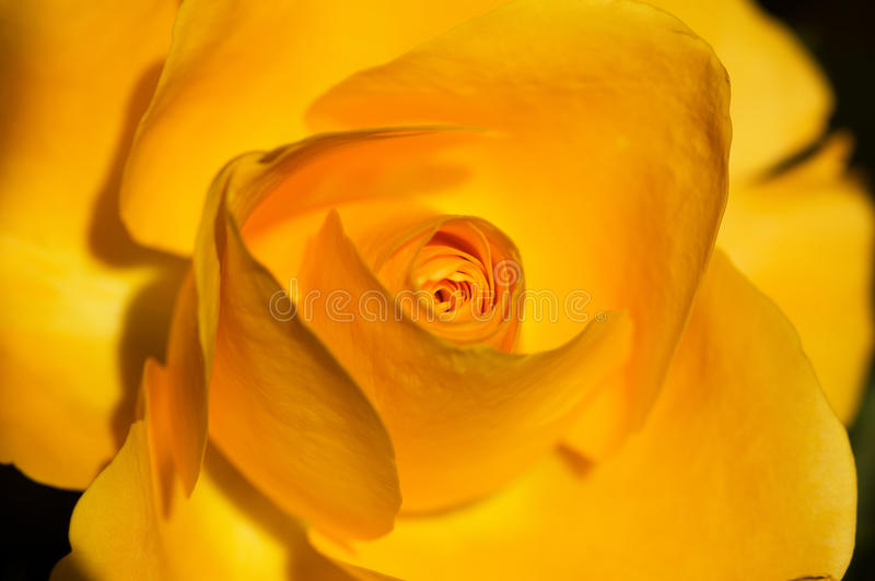 Tonalità dell'arancio fotografie stock libere da diritti