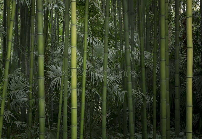 Tonalità di verde, di bambù e della giungla di Palmtree immagine stock