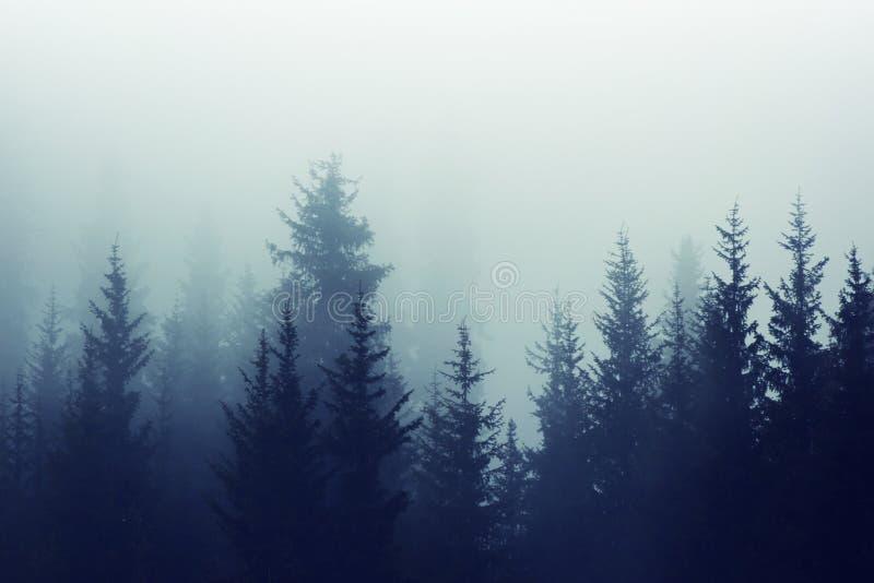 Tonalità nebbiosa di colore dei pendii di montagna dell'abetaia della nebbia immagine stock libera da diritti