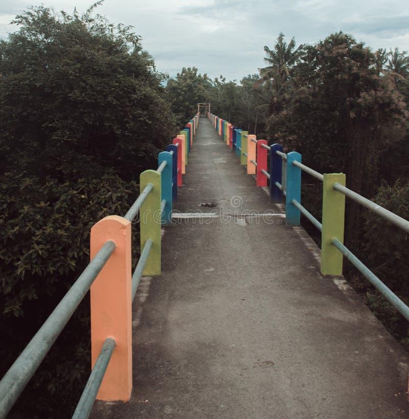 Tonalité bleue rouge de feuilles tropicales, fond d'image modifié la tonalité bleu de texture de PIC de déchirure photos stock