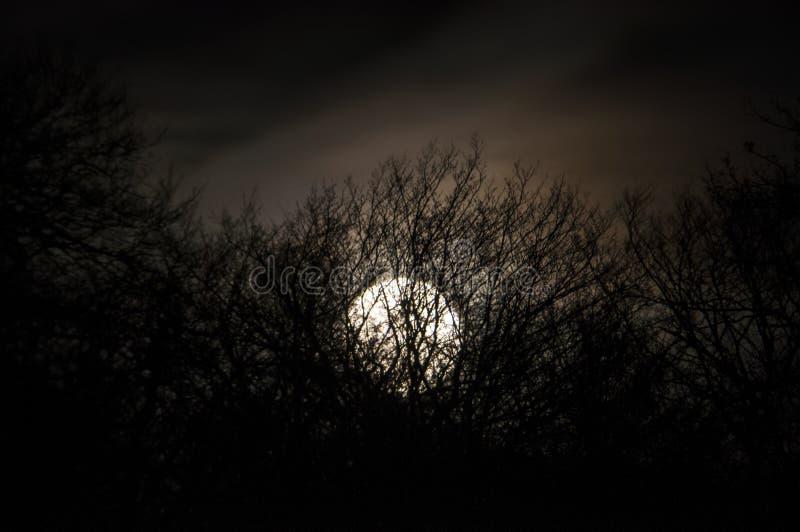 Tonar det mystiska landskapet för natten i förkylning - konturer av de kala trädfilialerna mot fullmånen och den dramatiska molni royaltyfri fotografi