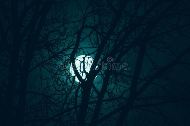 Tonar det mystiska landskapet för natten i förkylning - konturer av de kala trädfilialerna mot fullmånen och den dramatiska molni fotografering för bildbyråer