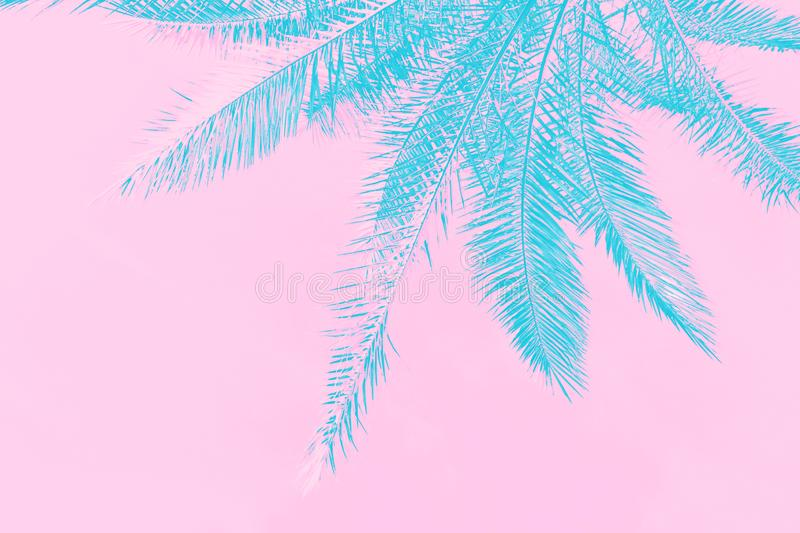 Toned blue palm tree leaves on pink sky background in trendy neon colors. Minimalist surrealistic style creative poster tropical. Concept royalty free stock photo