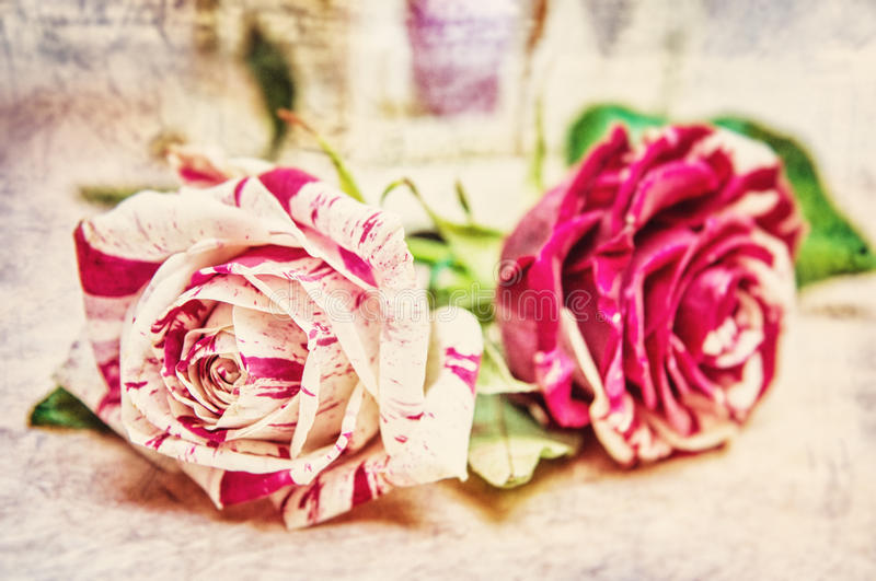 Toned photo of two roses for valentine´s or birtday day, flowers of love. Vintage photography royalty free stock image