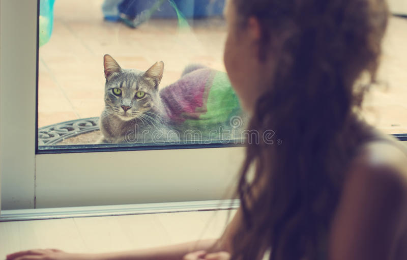 Toned portrait of girl looking out the window at the cat stock photos