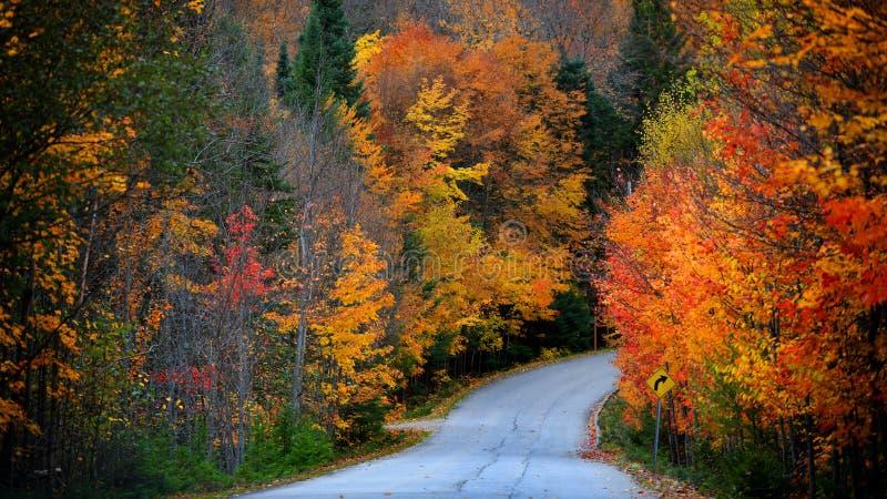 Toneel de herfstaandrijving in landelijk Quebec stock afbeeldingen