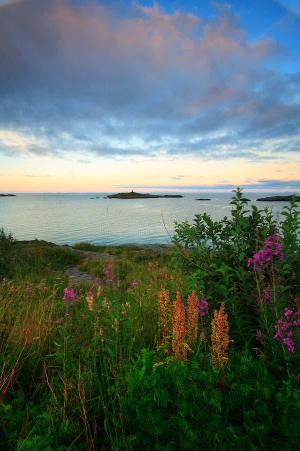 toneel gebloeid landschap royalty-vrije stock foto's
