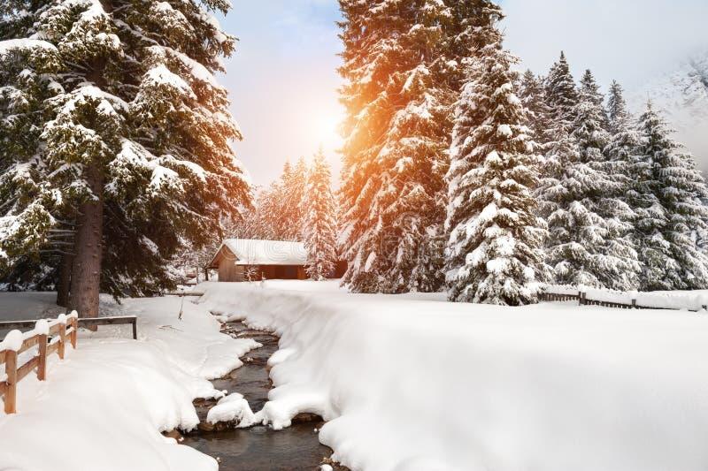 Toneel snow-covered bomen en blokhuis in de winterbos stock foto