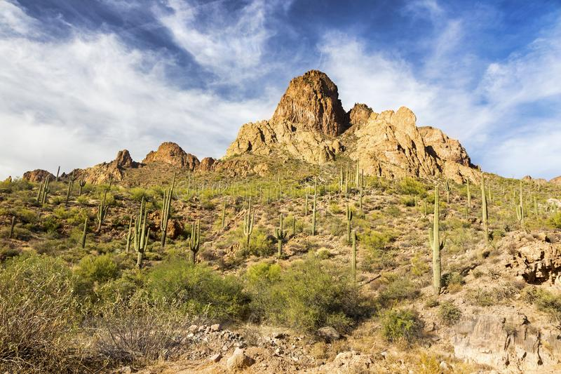 Toneel van Woestijnlandschap en Saguaro Cactusinstallaties in het Bijgeloofbergen van Arizona stock afbeeldingen