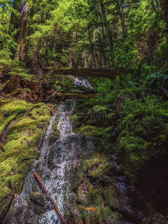 Toneel Vreedzame Noordwestenwaterval in het bos stock afbeelding