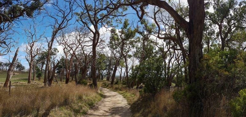 Toneel zandige weg aan het oude landbouwbedrijf Steeg van oude bochtige bomen Panorama, stock fotografie