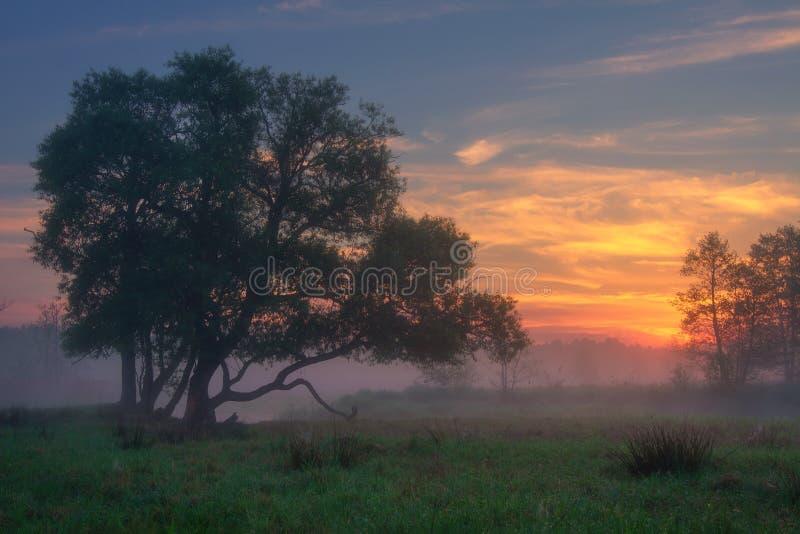 toneeldageraad Het landschap van de de zomeraard Mooie zonsopgang op nevelige ochtend Landschapsaard met kleurrijke hemel royalty-vrije stock fotografie