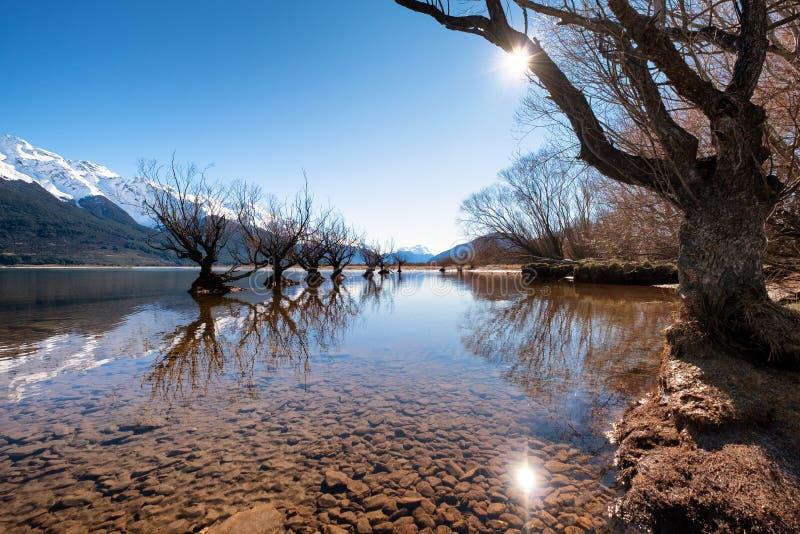 Toneellandschap van beroemde wilgen in Glenorchy, Nieuw Zeeland royalty-vrije stock afbeelding