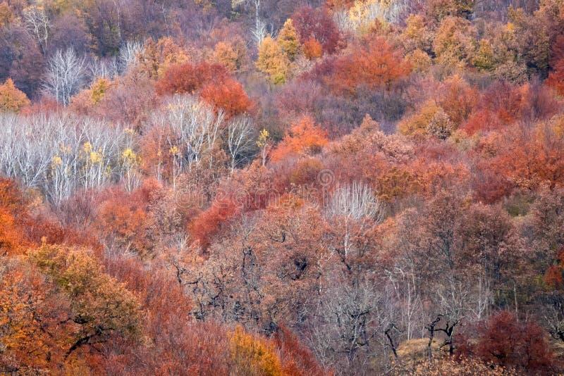 Toneellandschap van de herfstbos in bergen stock afbeeldingen
