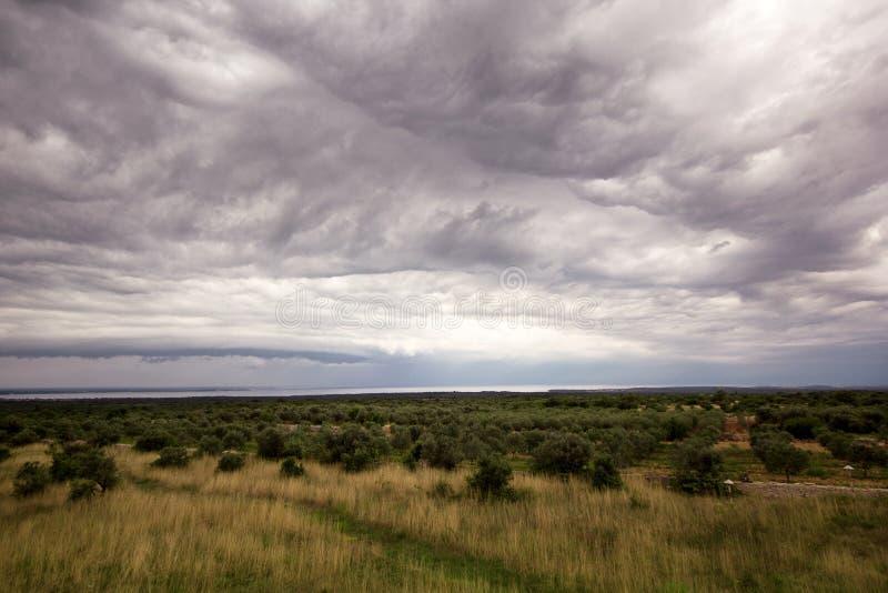 Toneelmening over donkere en dynamische wolken over olijfbomen/Prachtig omgevings panoramisch/Mooi natuurlijk milieu stock afbeelding