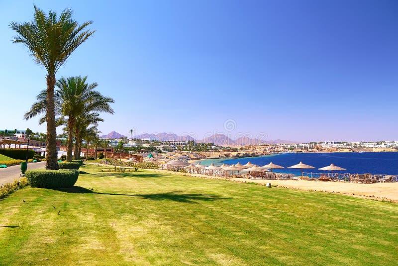 Toneelmening van het zandige strand met palmen en groen gras stock foto