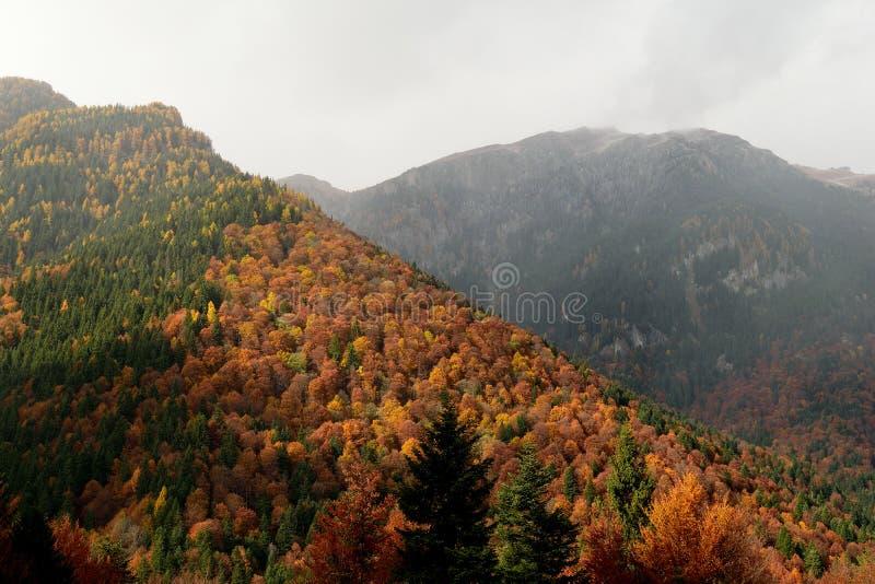 Toneelmening van Karpatische Bergen in Roemenië in dalingskleuren royalty-vrije stock foto