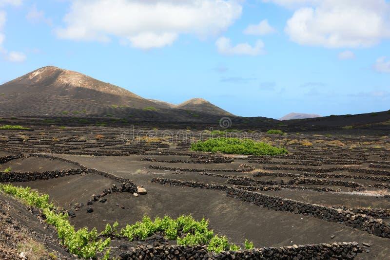 Toneelmening van Wijnbouw in La Geria op het vulkanische Eiland Lanzarote, Canarische Eilanden, Spanje, Europa stock foto's