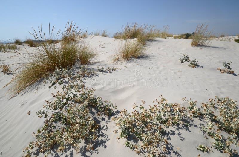 Toneelmening van wilde kustlijn van Maremma in zuidelijk Toscani? met zijn typische zandduinen stock afbeelding