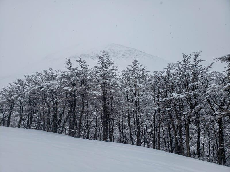 Toneelmeningen van Ushuaia, Argentinië, Patagonië stock foto's