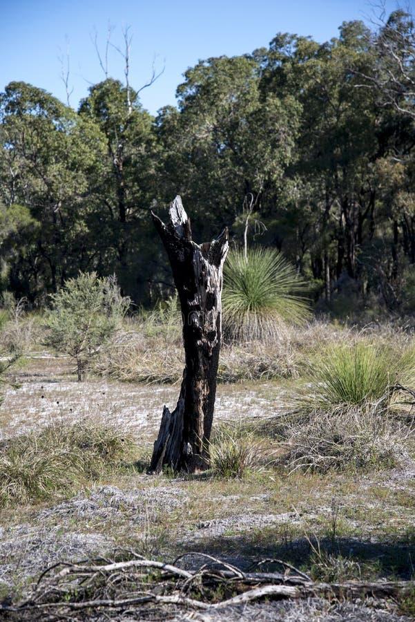 Toneeloverblijfselen van een gebrande boom in Whiteman-park stock afbeelding