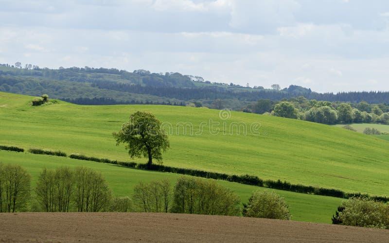 Toneelplatteland in Engeland stock foto's