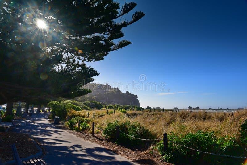 Toneelsumner beach in Christchurch royalty-vrije stock afbeeldingen