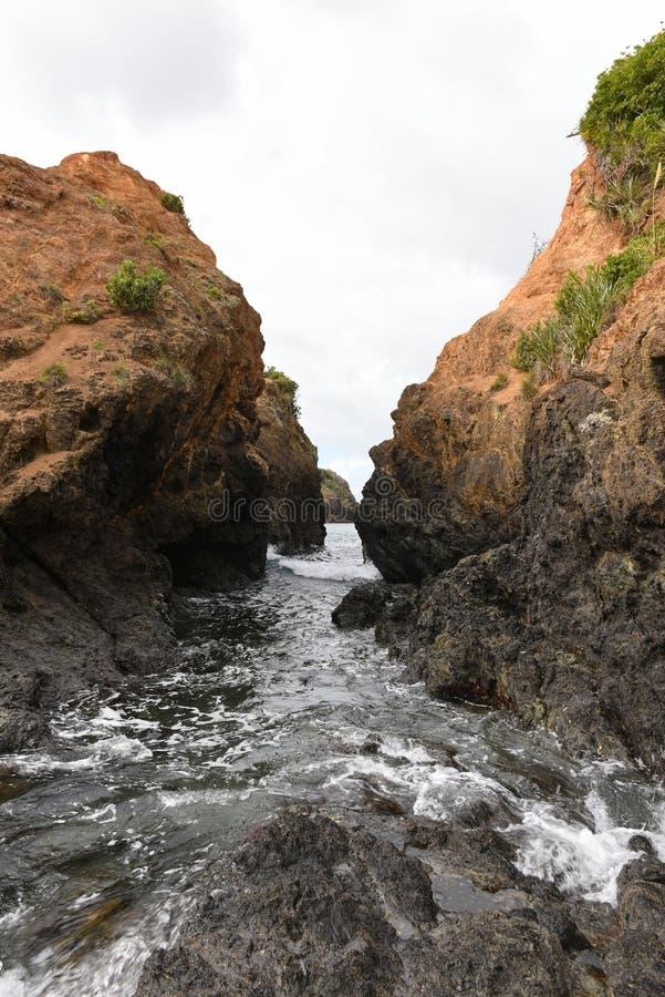 Toneeltutukaka-Reserve die aan Kukutauwhao tijdens ebben in Nieuw Zeeland walkable is stock fotografie