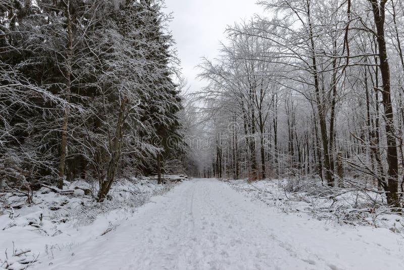 Toneelweg door bos in de winter royalty-vrije stock afbeeldingen
