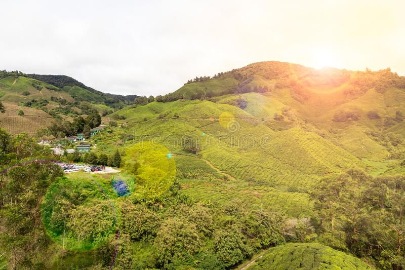 Toneelzonsopgang bij heuvelige de theeaanplanting van Cameron Highlands, Maleisi? stock foto's