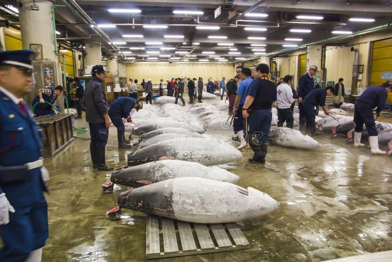 Tonfisk för auktion på den Tsukiji fiskmarknaden royaltyfria foton